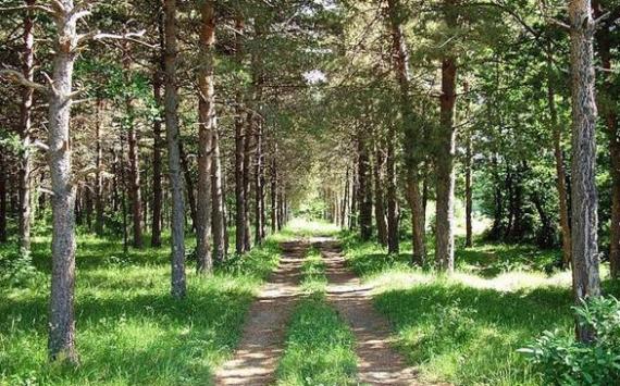 В Челябинской области будут ликвидированы более половины лесничеств